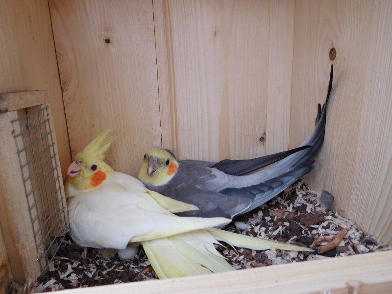velké ptáky v zadcích