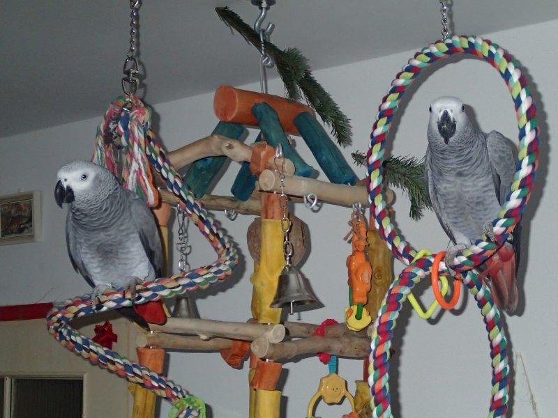 Velké ptáky onanovat